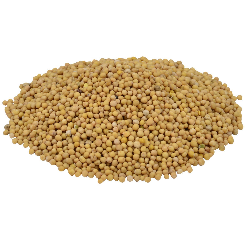 image of Mustard Seeds