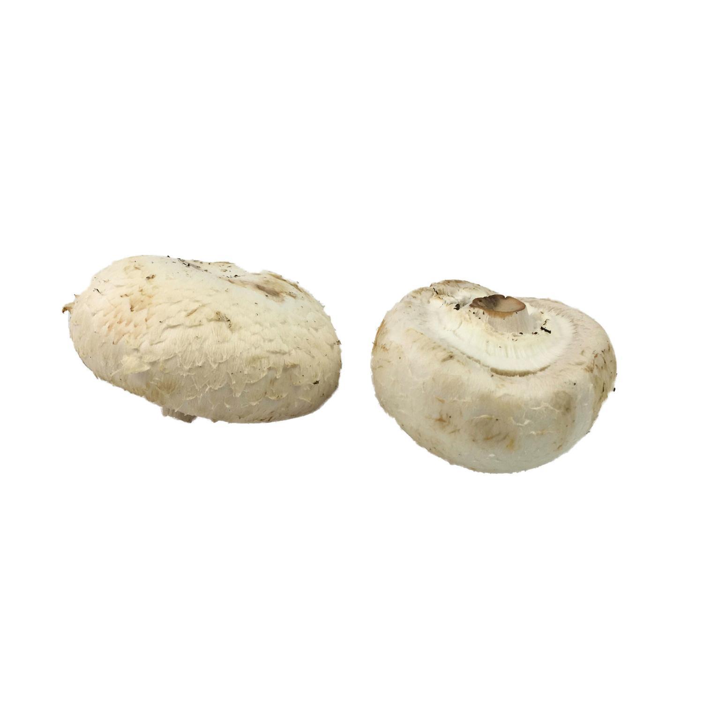 image of Button Mushroom