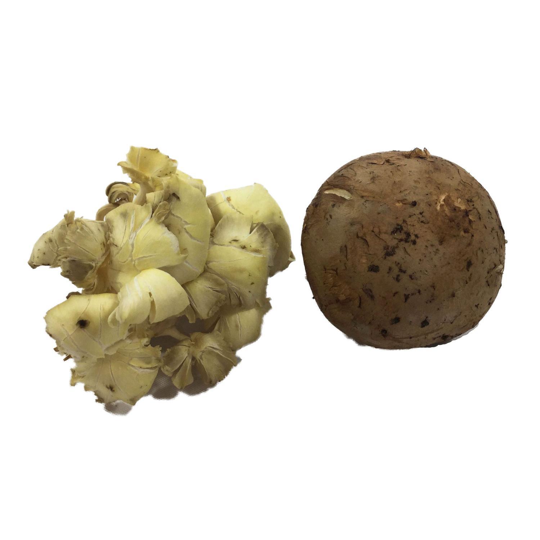 image of Wild Mushroom