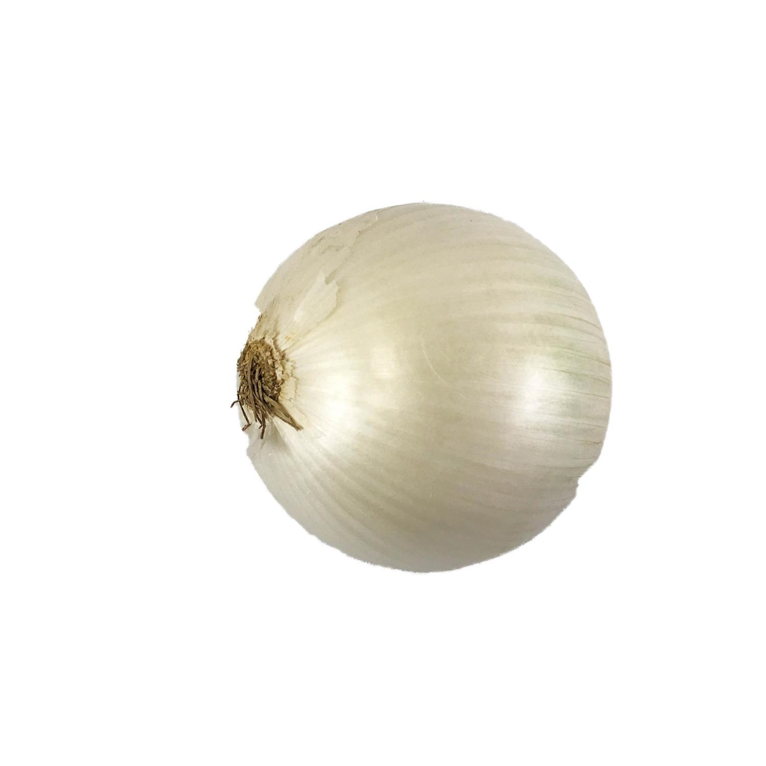 image of ONION WHITE JMBO FRSH CTN